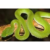 A preliminary checklist of reptile species in Kuiburi national park