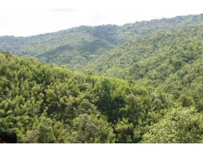 Mixed deciduous forest, Ratchburi