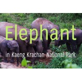 Population survey of Asian elephant (Elephas maximus) in Kaeng Krachan national park, Thailand