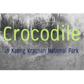 Attitudes and perspectives of local communities on the Siamese crocodile  (Crocodylus siamensis) management in Kaeng Krachan national park